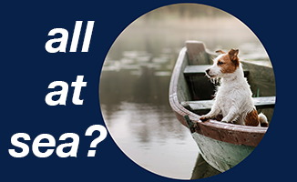 "photo of dog in boat with text ""all at sea"""